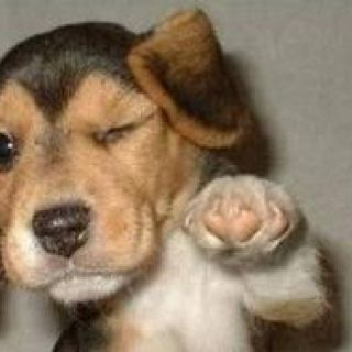 Lol Fist Pump Puppies Funny Funny Dogs