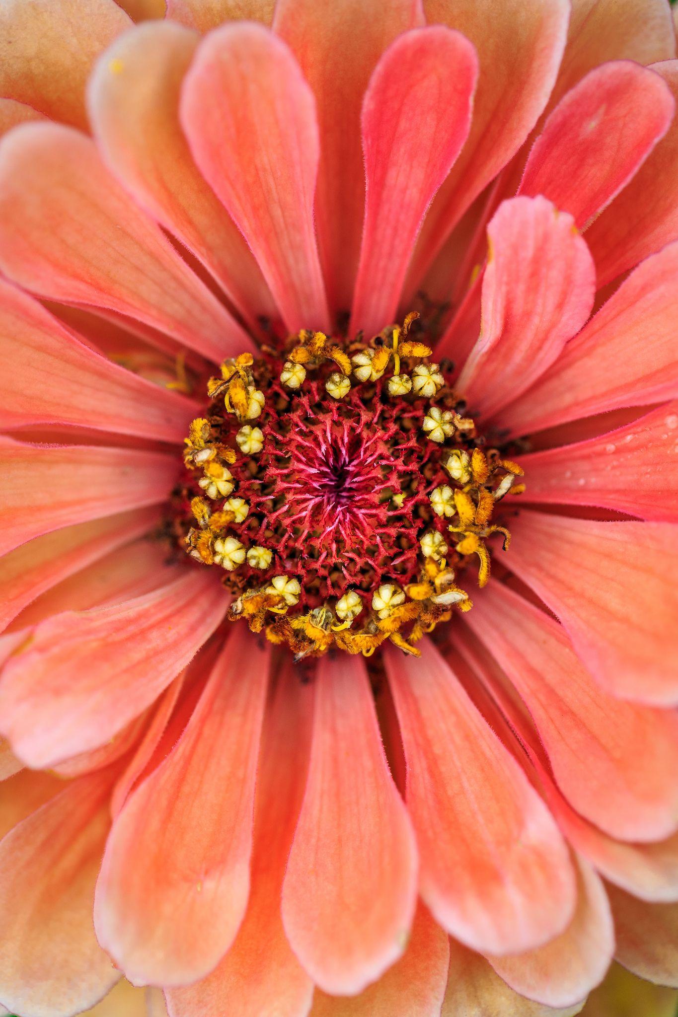 Img 0318 Jpg Most Beautiful Flowers Amazing Flowers Beautiful Flowers