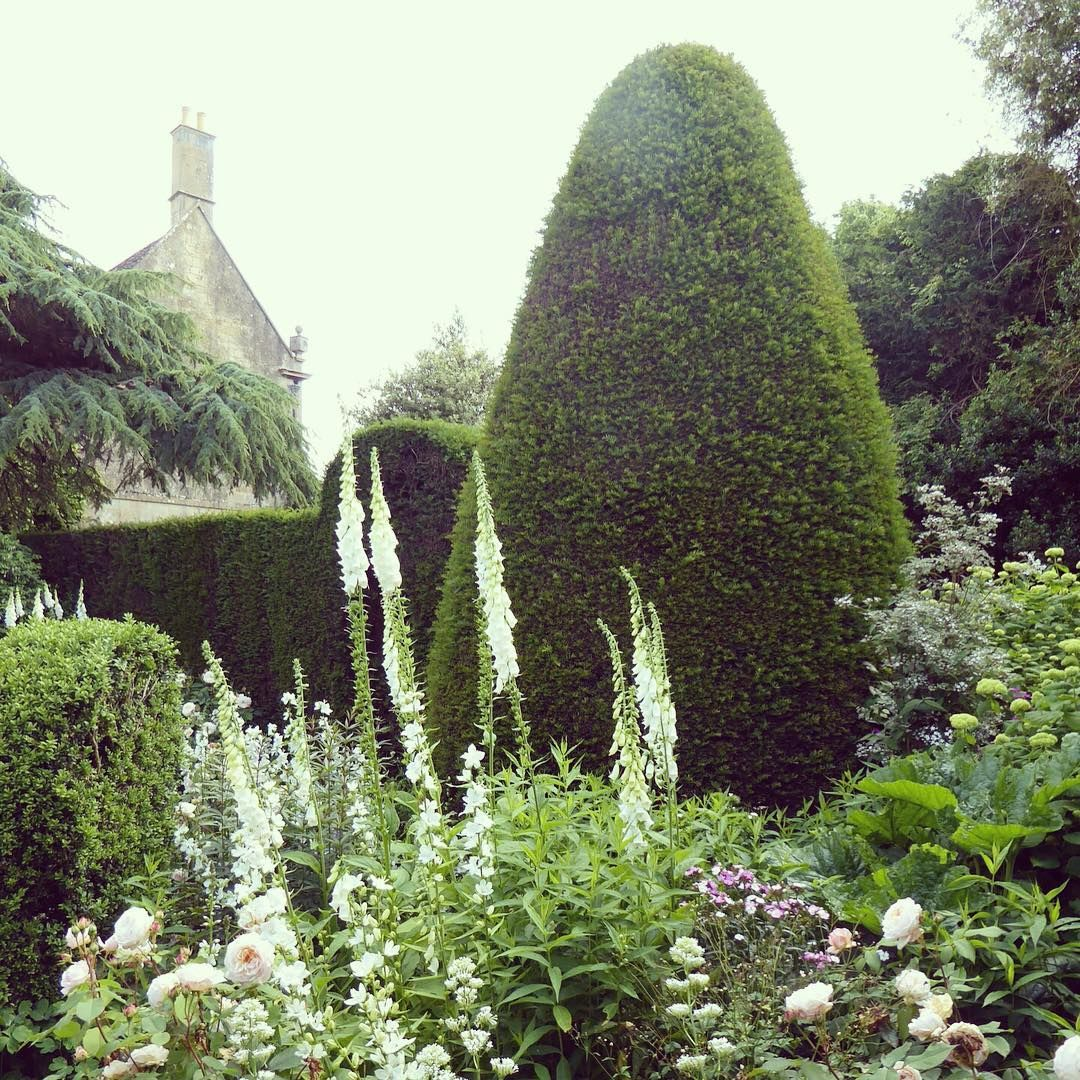 Comment Tailler Le Laurier Sauce roses #foxglove #yew | moon garden, cottage garden