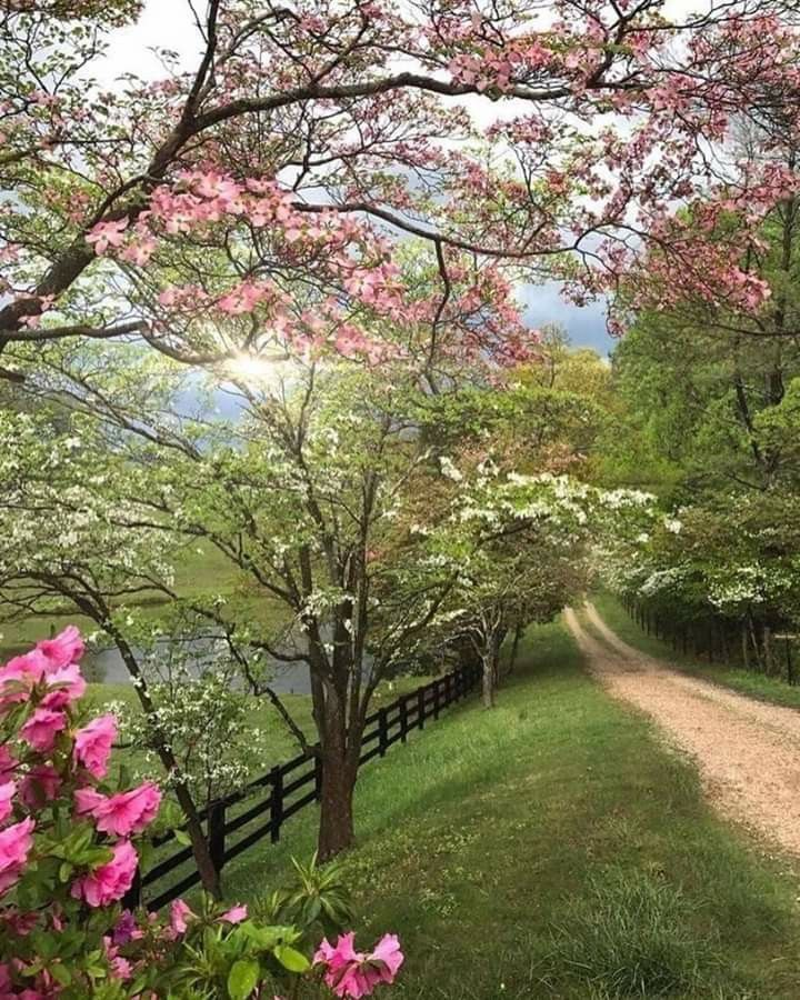 Pin By Terry Ball On Pictures Spring Scenery Spring Landscape Nature Photography Flowers