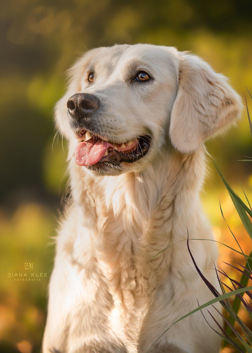 Hundefotografie im Märkischen Kreis und NRW