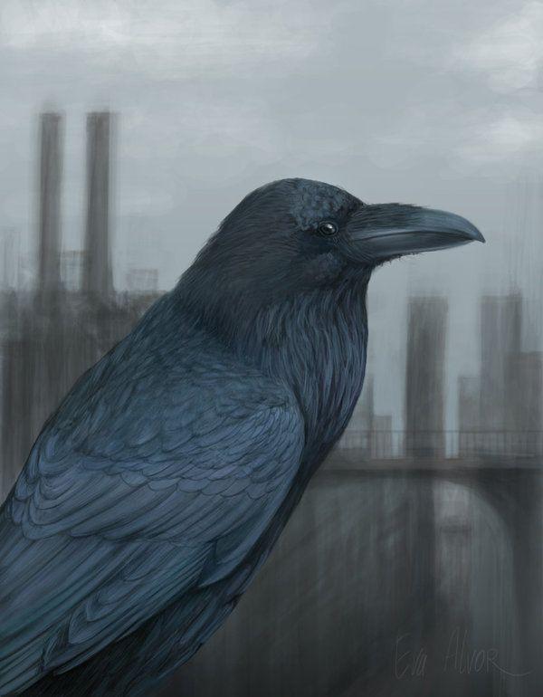 Raven by Alvor.deviantart.com on @deviantART