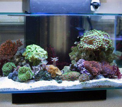 6 Gallon ReadyReef Fluval Edge Nano Cube Aquarium. Nice Mini Reef.