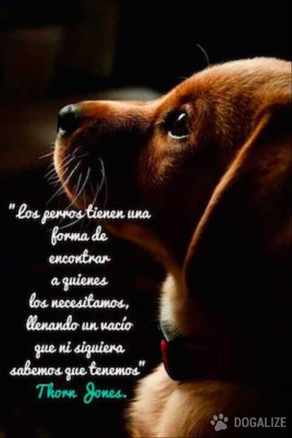 Los Perros Llenan Un Vacío De Nuestro Corazón Perros