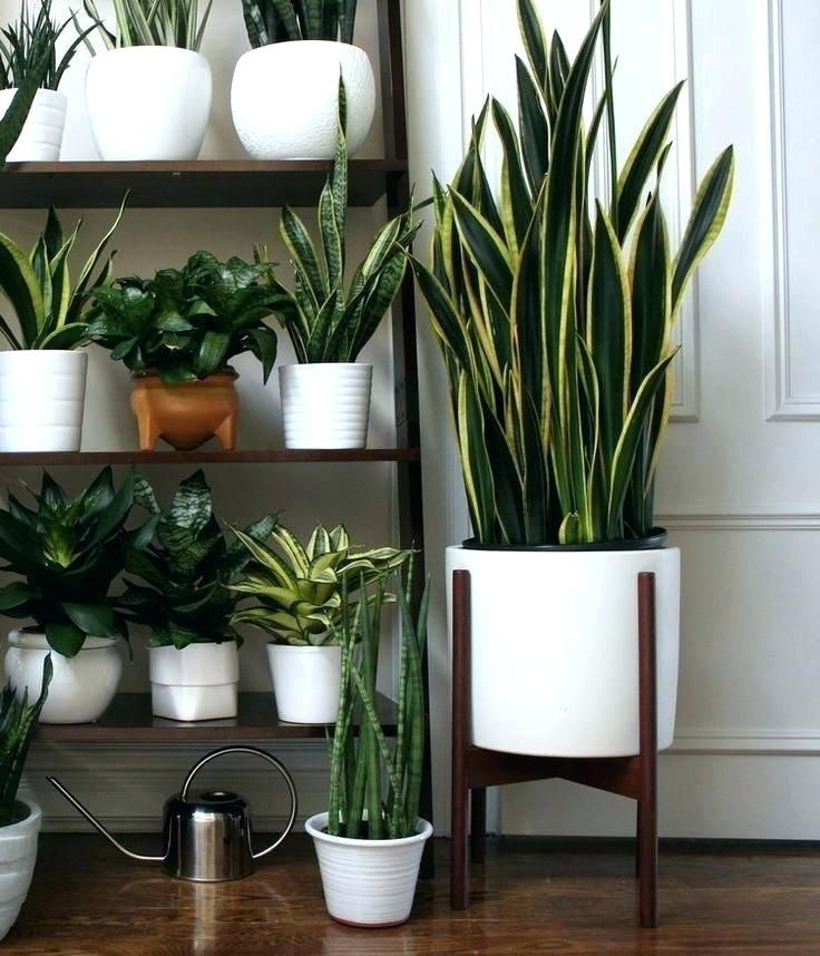 Indoor Plant Pots Piercingfreundclub Large Planters Best Ideas On Planter