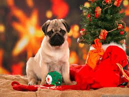Image result for christmas pugs wallpaper