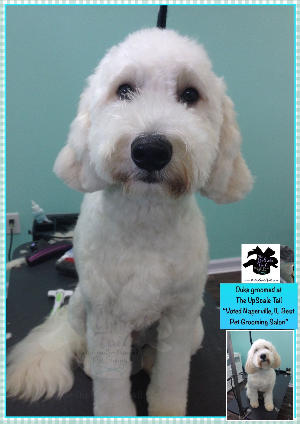 Duke, grooming makeover at The UpScale Tail, Naperville
