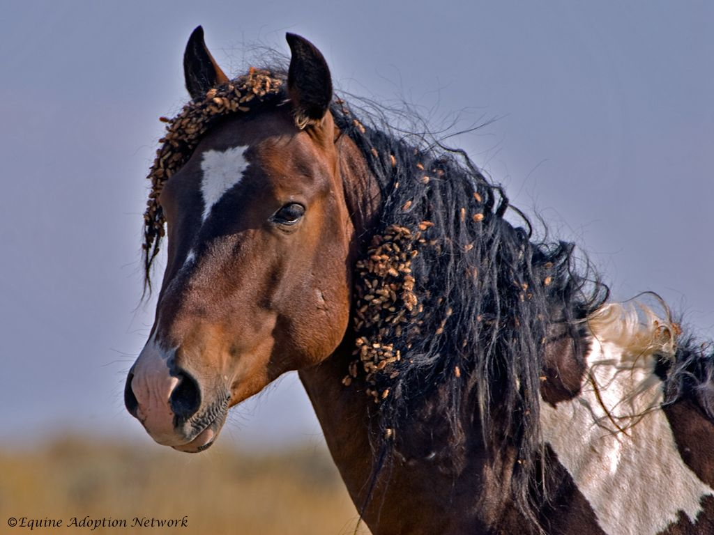 Free Horse Image Equine Adoption Network Save a Life