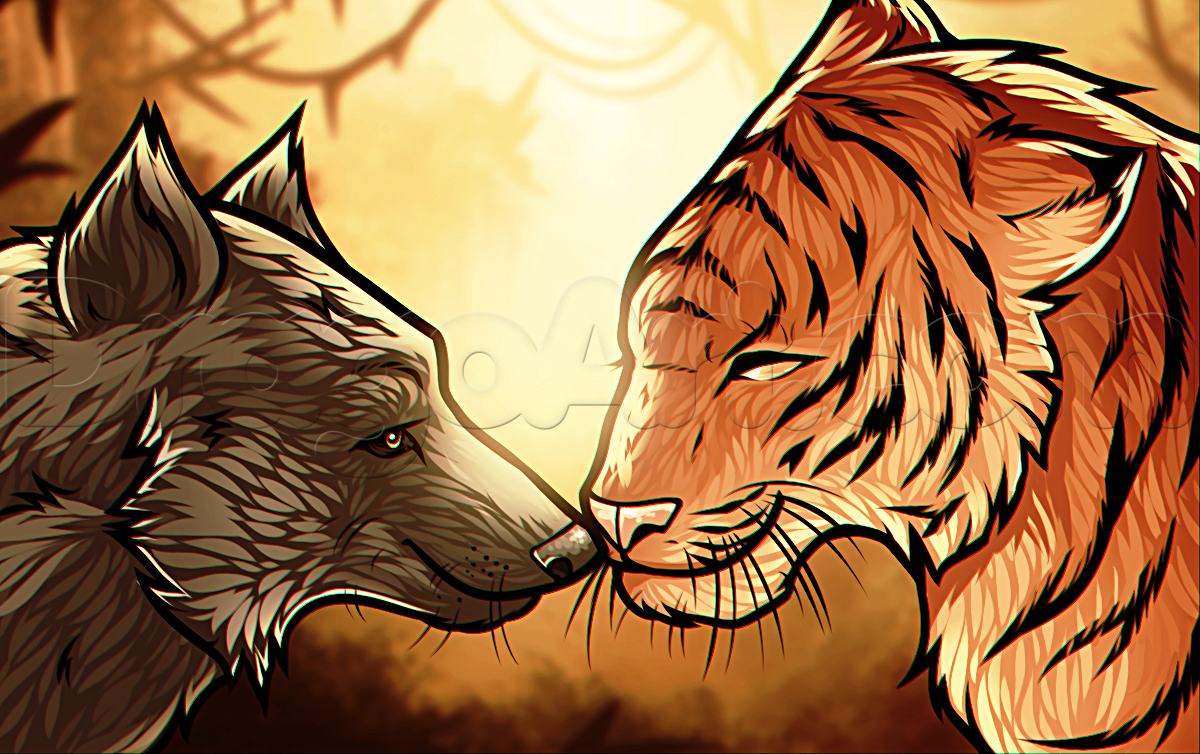 How To Draw A Wolf And Tiger by Dawn Animal drawings