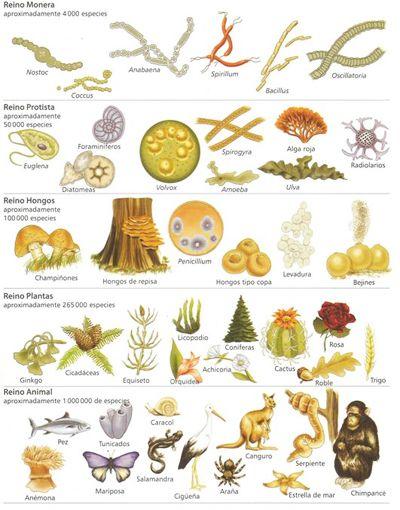 Existe una gran diversidad de seres vivos en la naturaleza. Para ...