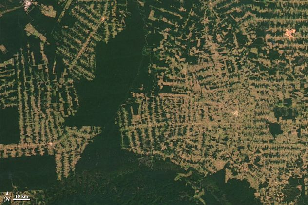 This Is Deforestation What Satellites Have Documented Is A