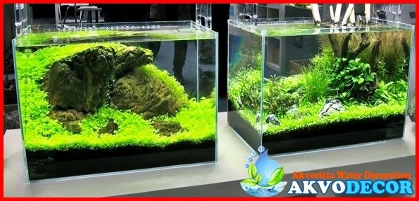 Captivating Jasa Setting Aquascape Di Tangerang