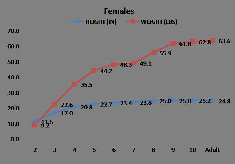 Image Result For Doberman Pinscher Puppy Weight Chart