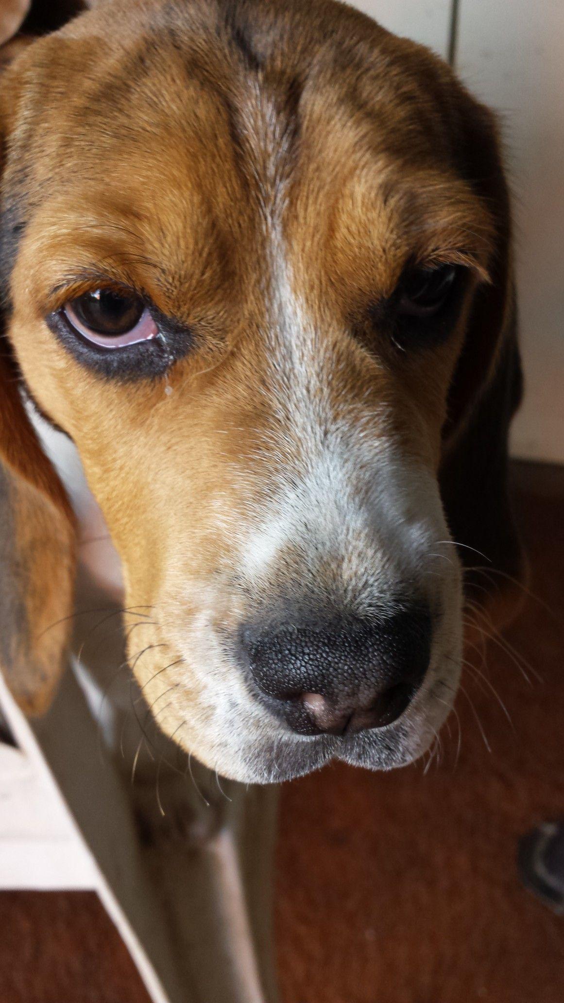 14++ Yancey county animal shelter images