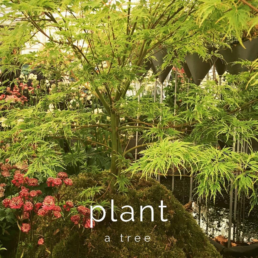 Day 2 goal of 30 days of #inspiration #selflove #plantatree #woodlandtrust #sowseeds