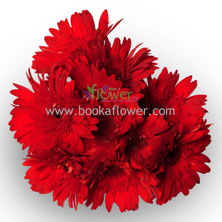 Give Surprise Gifts As A Flowers To Your Lovable One And Make This