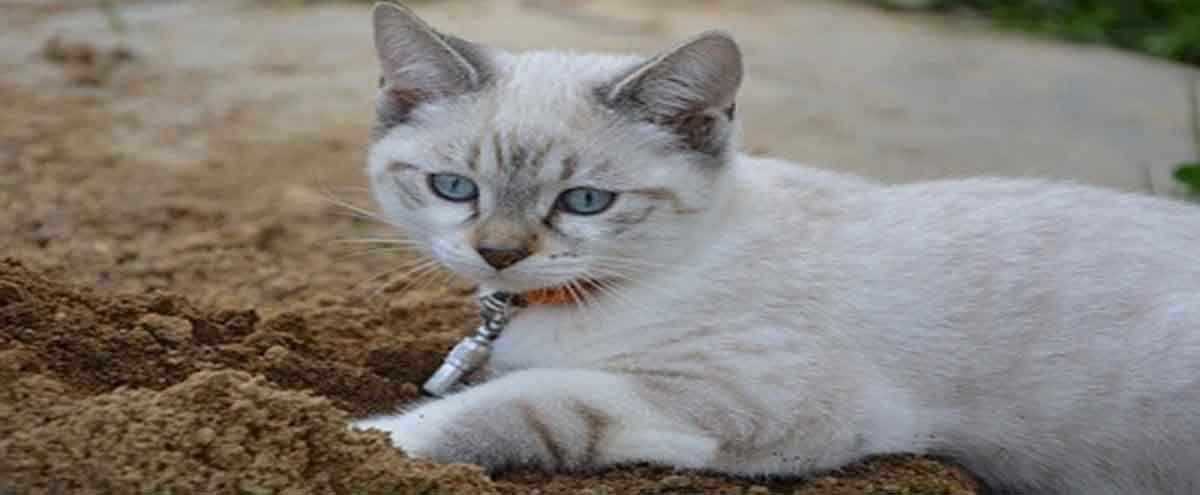 Park Art|My WordPress Blog_Blood In Your Cats Poop