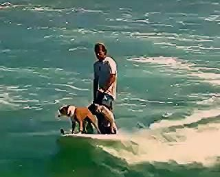 Photo of Look how cool these surfing dogs are!