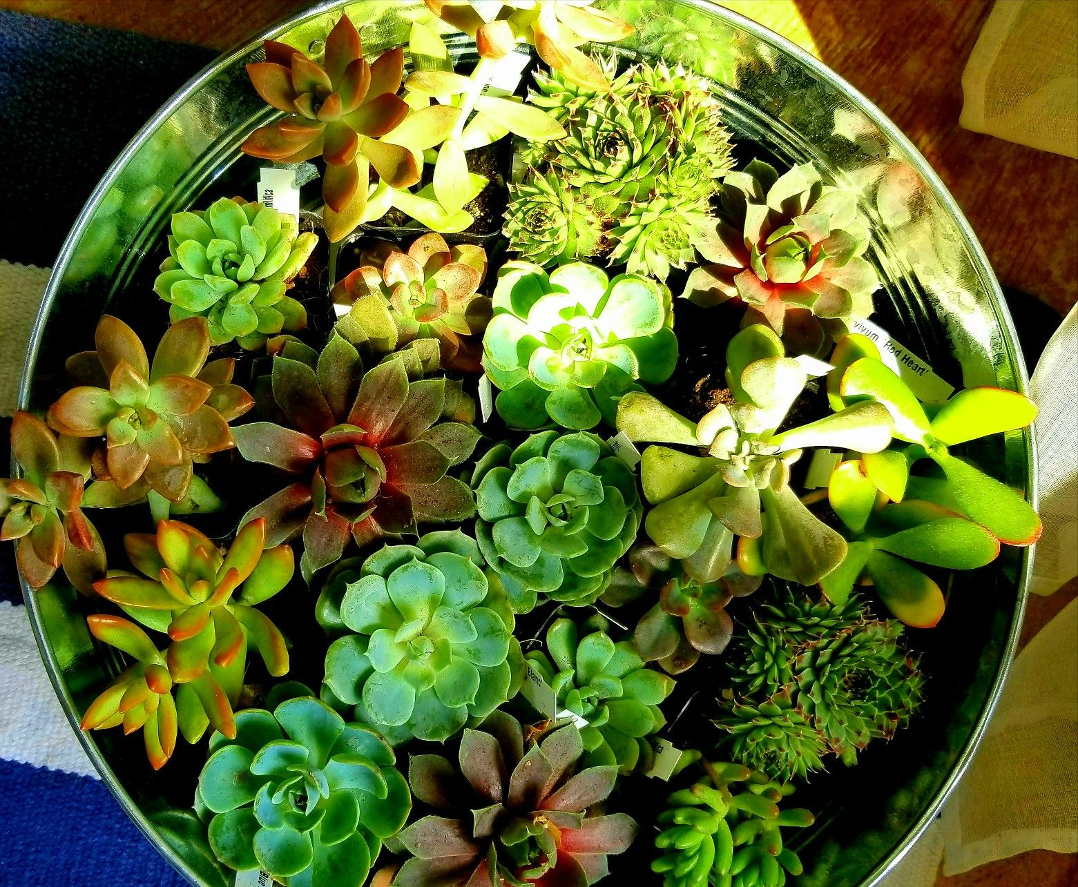Bucket full of Beautiful Bliss   Succulents, Plants ...