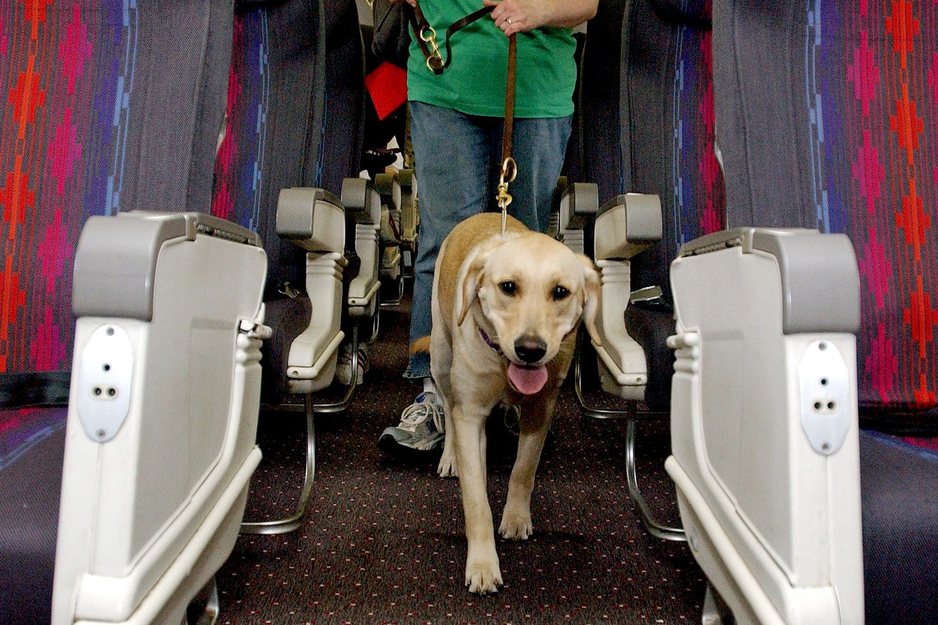 Which Airlines Have the Best Pet Policies? Emotional