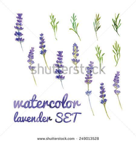 Lavande Aquarelle Photos Et Images De Stock Shutterstock