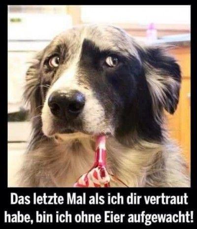 Pin Von Jan Vogt Auf Witze C O Lustige Bilder Von Tieren