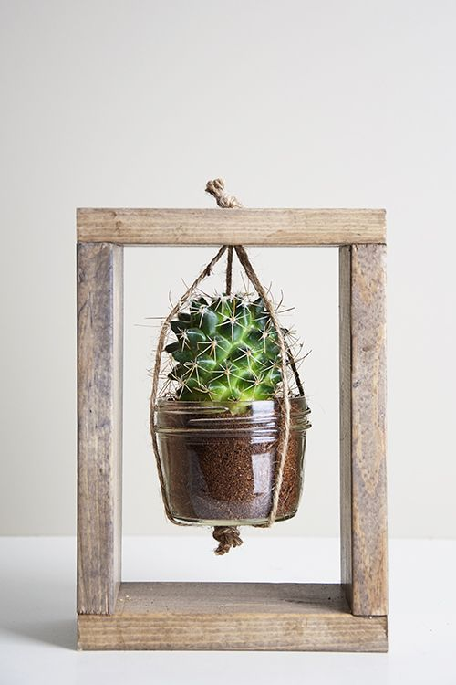 Step By Step Guide For Diy Cactus Gardeners