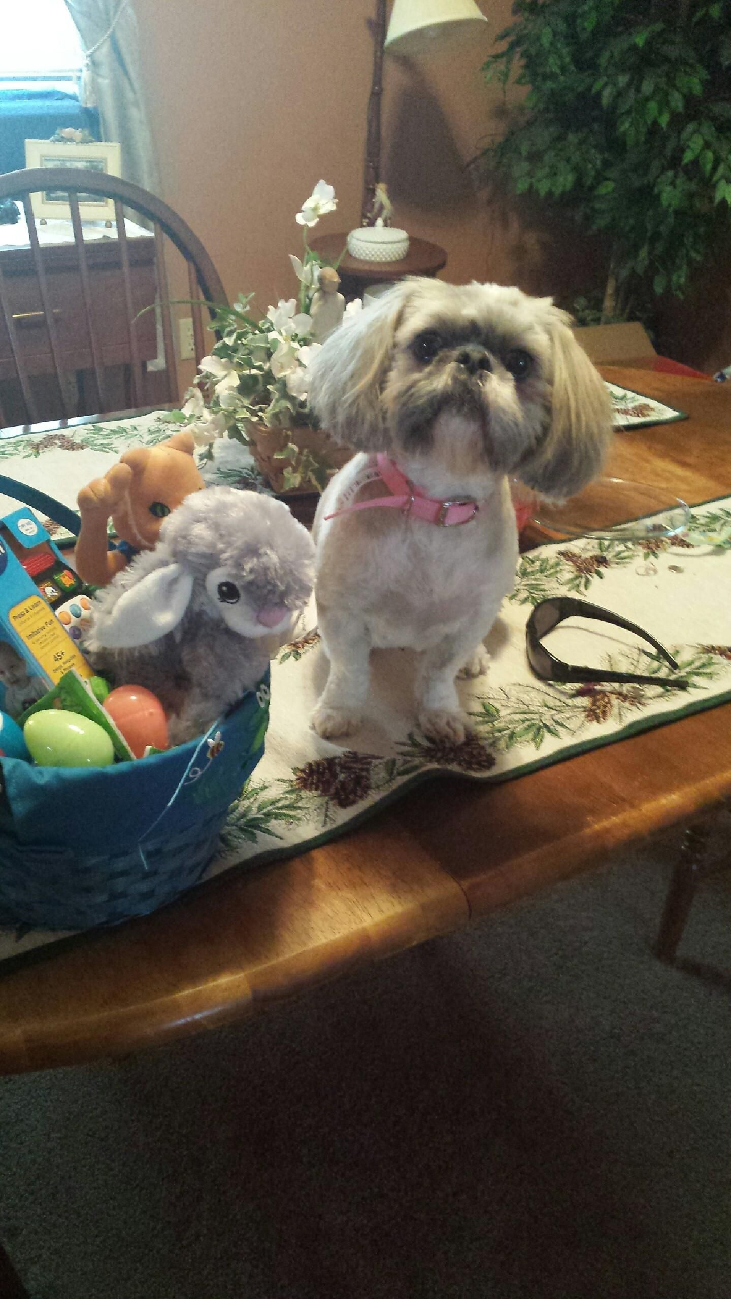My girlfriends darling baby maggie beside easter basket 2015 my girlfriends darling baby maggie beside easter basket 2015 negle Images