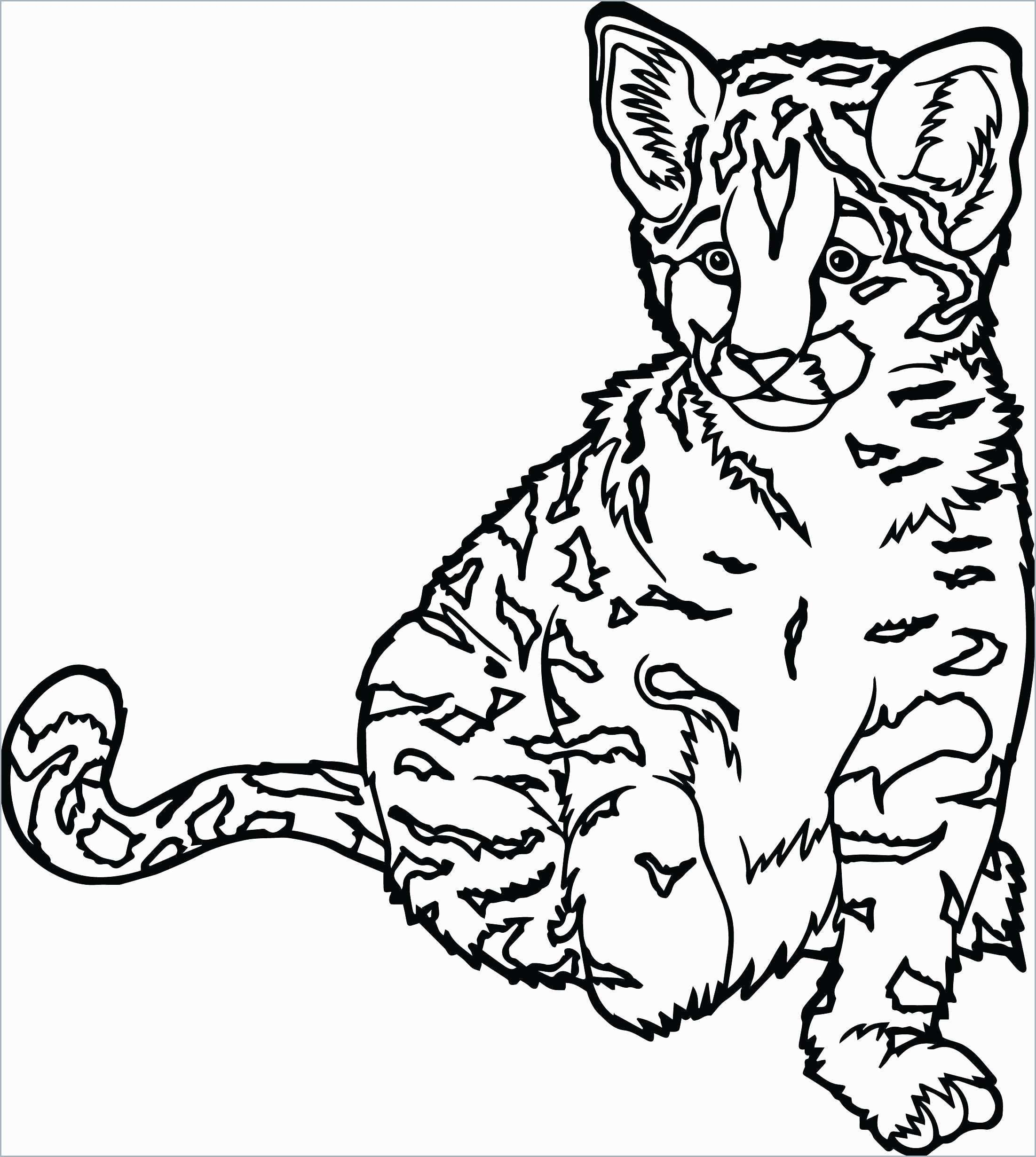 Cute Cat Coloring Pages Coloring Pages Coloring Pages Cute