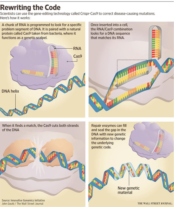 Why Gene-Editing Technology Has Scientists Excited Genetics - new blueprint gene expression
