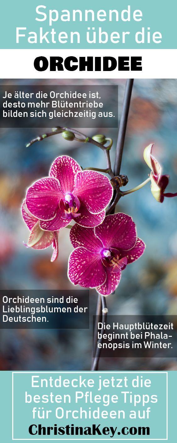 Orchideen Pflege Tipps - Kreative Fotografie Tipps und Foto Hacks