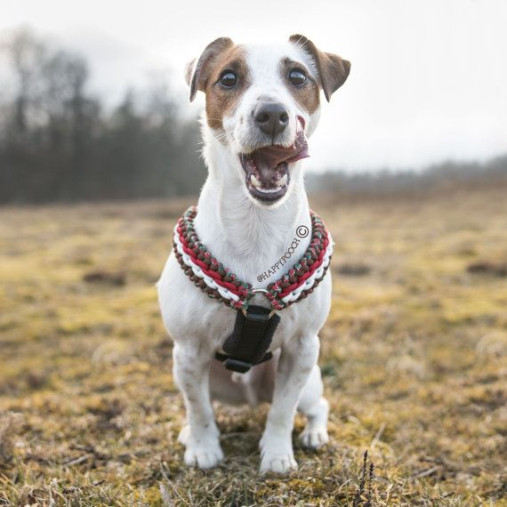Adjustable Paracord Dog Harness Fleece Padded Harness Custom Dog