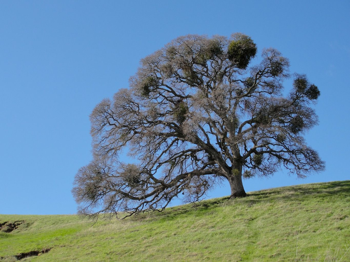 Red Wildflowers Northern California To Plant Trees The First Was 20 Years Ago Native Plants