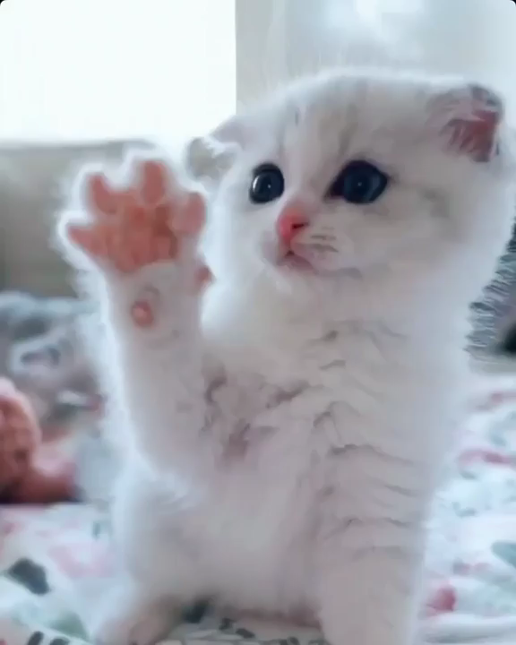 Pin Von Iwona Dominiec Auf I Love Cats Kittens Baby Katzen Susse Katzen Katzen