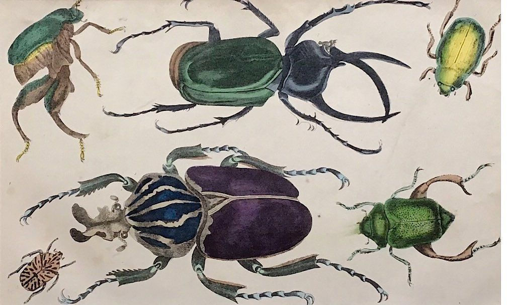 """Ex Libris's Instagram post: """"Beetle Print from 1854 🕰 just added to our little print boutique #mountedprints #antiquesforsale #printsforsale #beetles #oldprints…"""""""