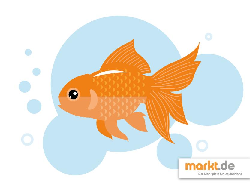 Welche Fische können in meinen Gartenteich? | markt.de #fische #teich #garten