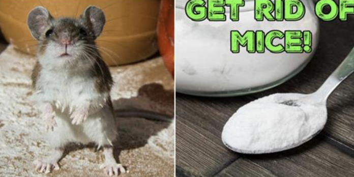 Pin On Ways To Get Rid Of Mice