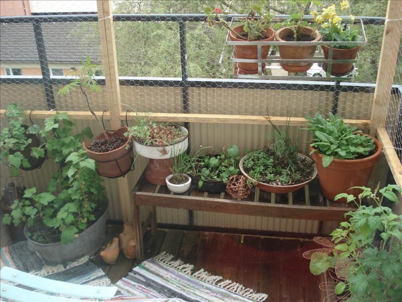 Cat Safe Balcony Patio