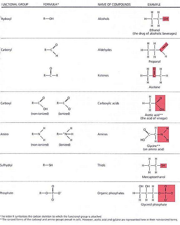 Identifying Functional Groups Worksheet Ap Biology - Worksheets