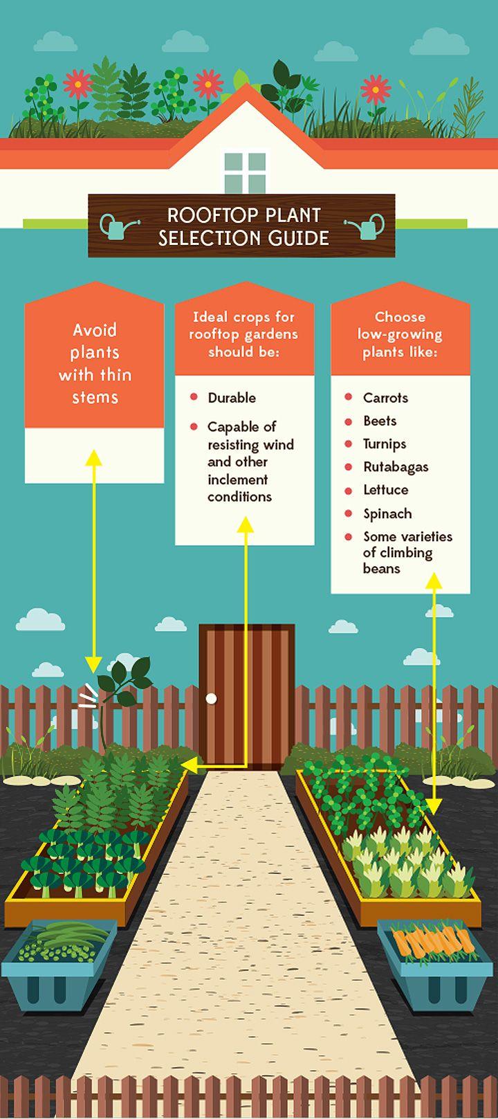 rooftop-garden roof preparation infographic | gardening | Pinterest ...