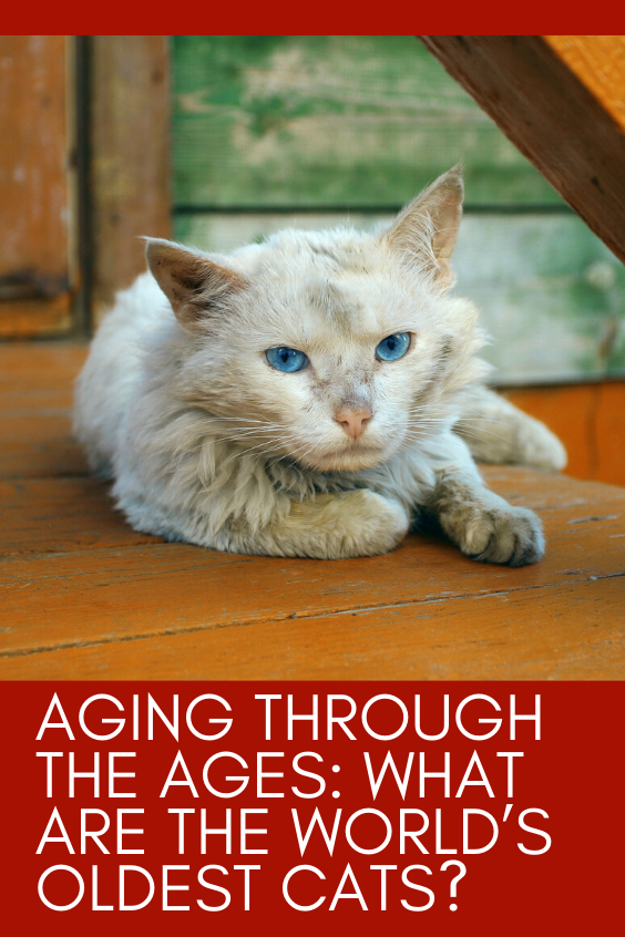 Aging Through The Ages What Are The World S Oldest Cats Old Cats Funny Cute Cats Cats