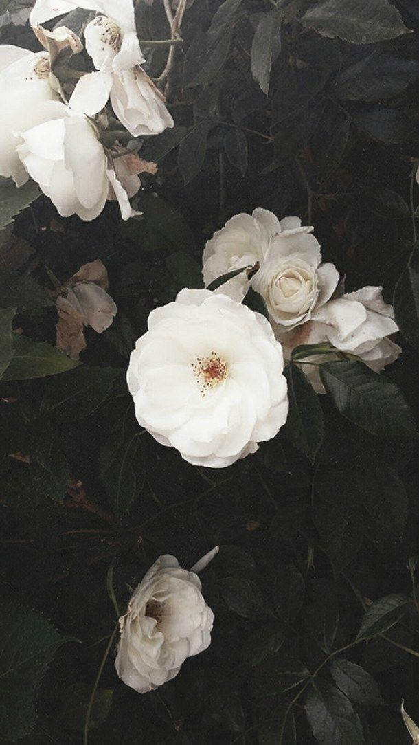 Simple Yet Detailed Flower Aesthetic Attractive Wallpapers Beautiful Flowers