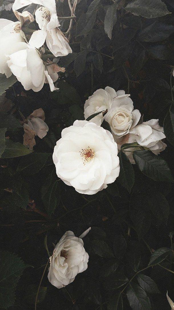 Simple Yet Detailed Flower Aesthetic Watercolor Wallpaper Iphone Nature Iphone Wallpaper