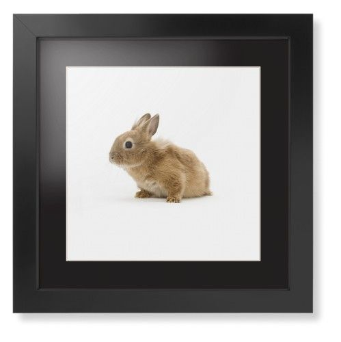 Bunny Framed Print, Black, Contemporary, Cream, Black, Single piece, 12 x 12 inches