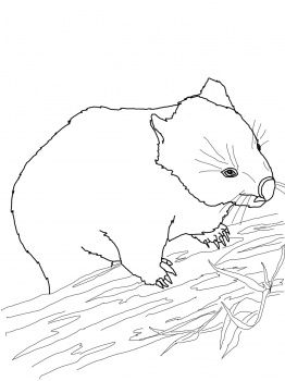 There are some cute wombat coloring pages here! (I wound