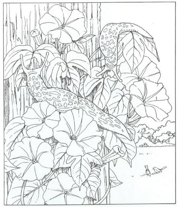 40 coloring pages of nature around the house coloring