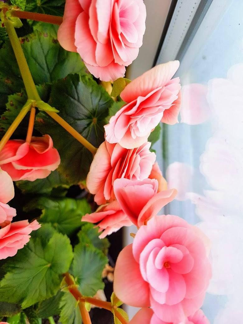 flowers . . . #flower #naturelover #natureinside #mik #magyarinsta #dolgokamiketszeretek #thingsilike #igflower #virág #ighungary #igdaily #photooftheday #followme #winter #wintermorning #beautyinside