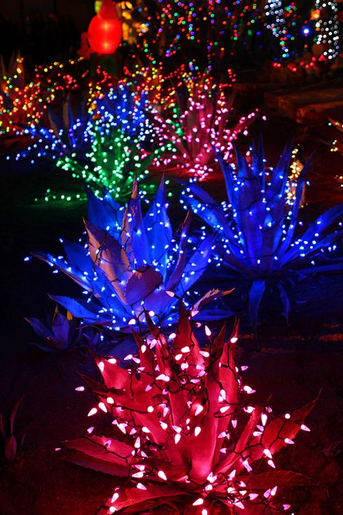 Five fun things to do in las vegas during the holidays - Ethel m cactus garden christmas 2017 ...