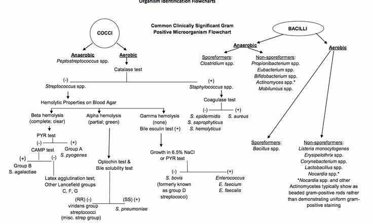Organism identification Flow chart Laboratory Diagnosis of - solubility chart example