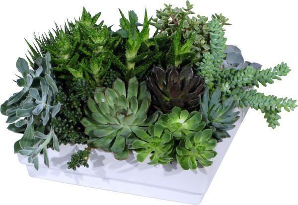 Love succulents...